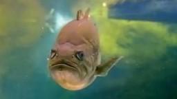 Balığın Bakışı