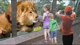 Bu Cama Bir Şey Olmaz Dediler - Korkulan Oldu!.. Hayvanlar Camın Ne Olduğunu Bilmiyor!