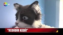 Kedidir kedi!